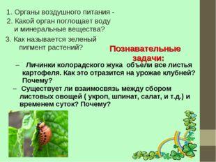 1. Органы воздушного питания - 2. Какой орган поглощает воду и минеральные ве
