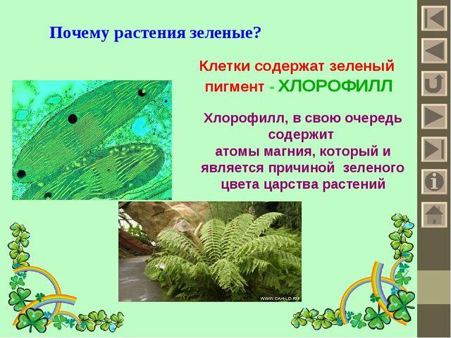 Почему растения зеленые? Клетки содержат зеленый пигмент - ХЛОРОФИЛЛ Хлорофил...