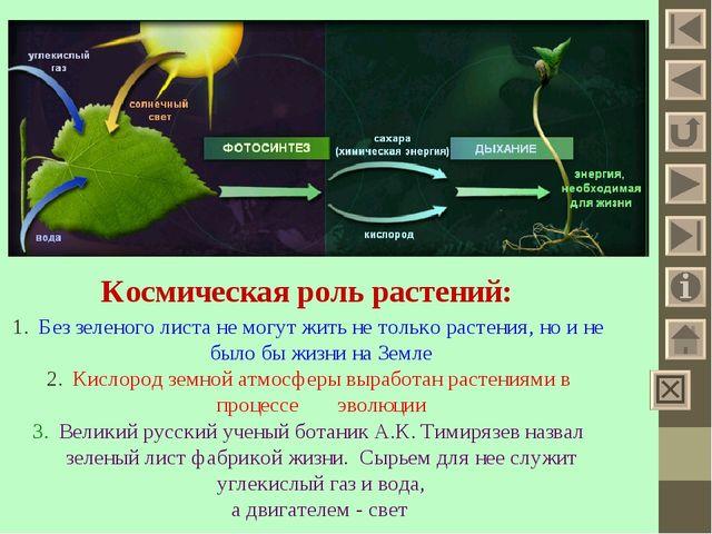 Космическая роль растений: Без зеленого листа не могут жить не только растени...