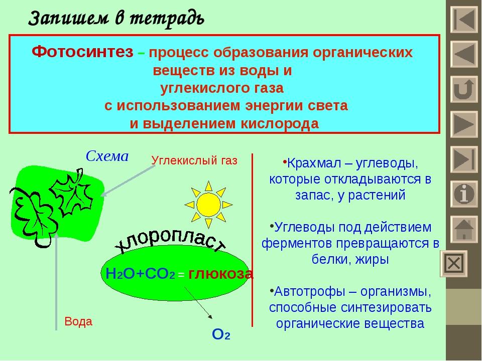 Запишем в тетрадь Фотосинтез – процесс образования органических веществ из во...