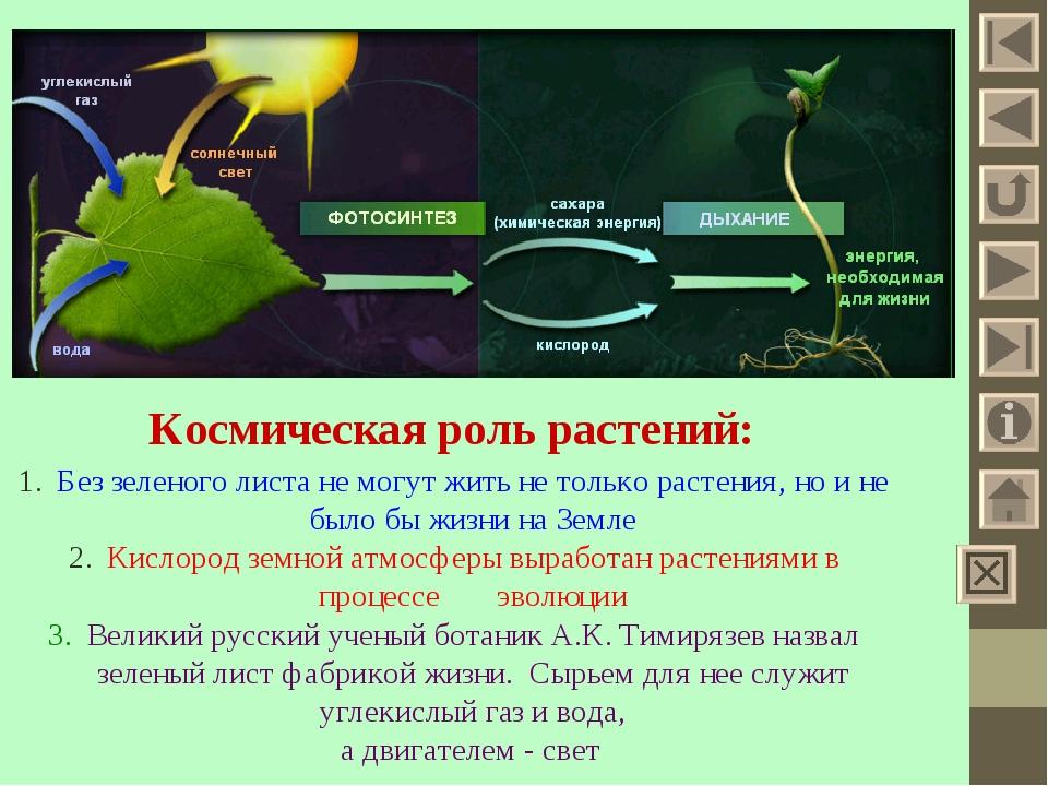 большинства земля во времена фиолетового фотосинтеза празднования всё больше