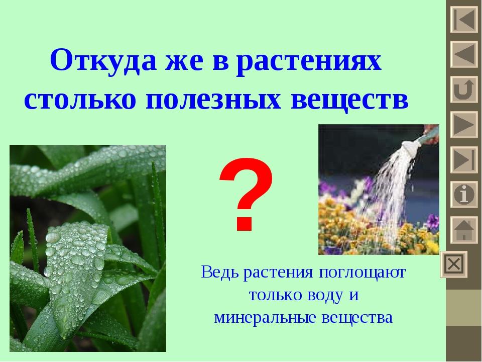 Откуда же в растениях столько полезных веществ ? Ведь растения поглощают тол...