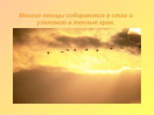 Многие птицы собираются в стаи и улетают в теплые края.