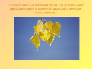 Вначале листья меняют цвет - из зеленых они превращаются в желтые, красные и