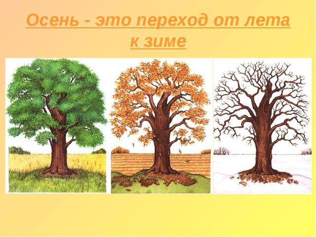 Осень - это переход от лета к зиме