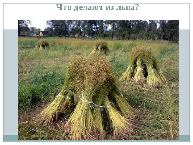 Что делают из льна?
