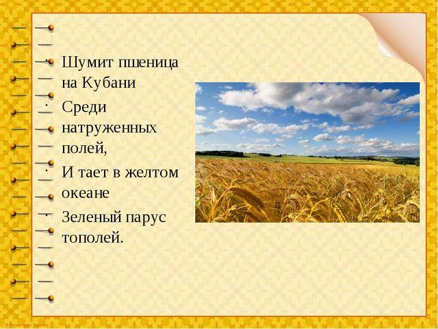 Шумит пшеница на Кубани Среди натруженных полей, И тает в желтом океане Зелен...