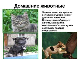 Домашние животные Человек может пострадать не только от диких, но и от домашн