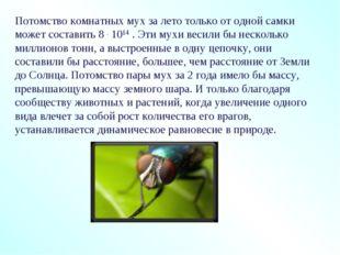 Потомство комнатных мух за лето только от одной самки может составить 8 . 101