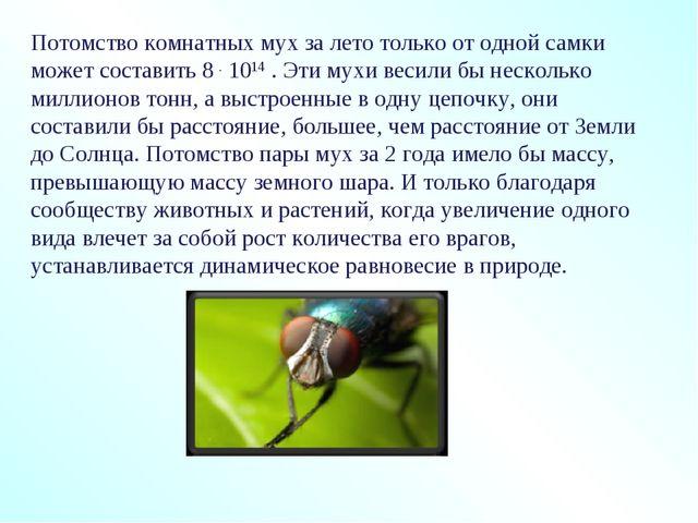 Потомство комнатных мух за лето только от одной самки может составить 8 . 101...