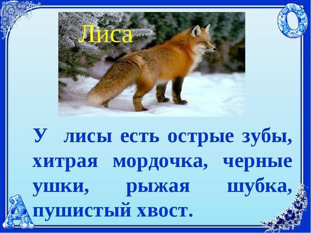 У лисы есть острые зубы, хитрая мордочка, черные ушки, рыжая шубка, пушистый...