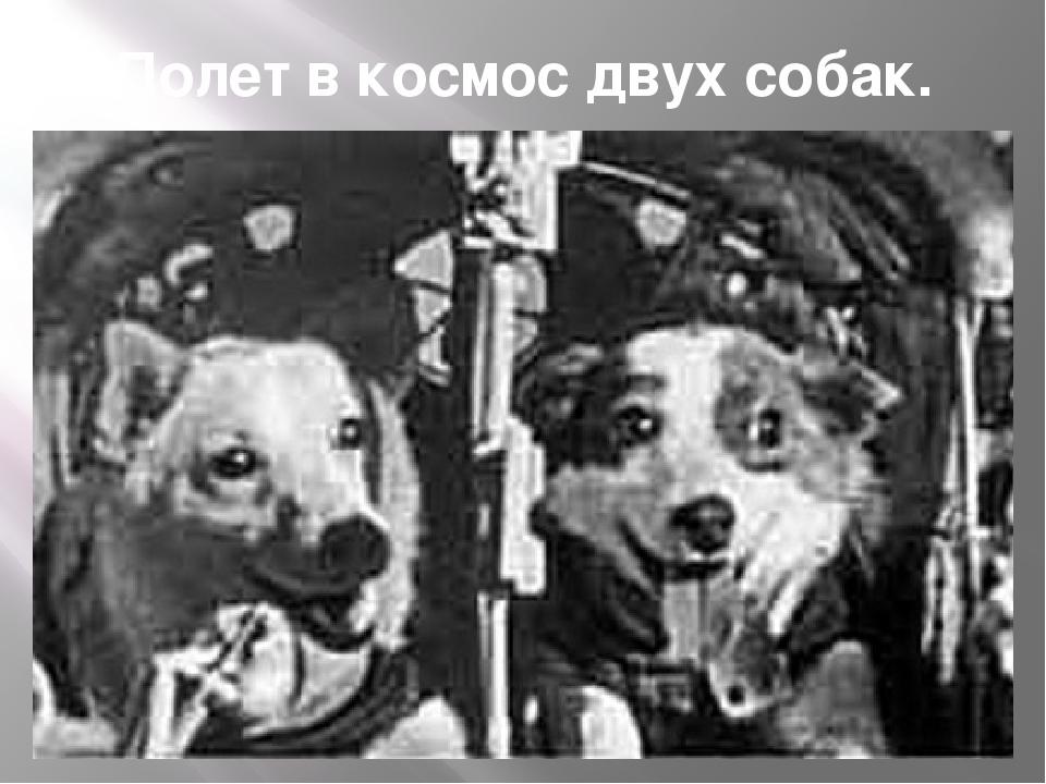 Полет в космос двух собак.