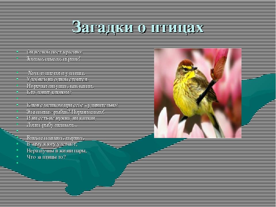 Загадки о птицах Он весной поет красиво: Звонко, весело, игриво! Хоть и две н...