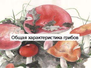 Общая характеристика грибов