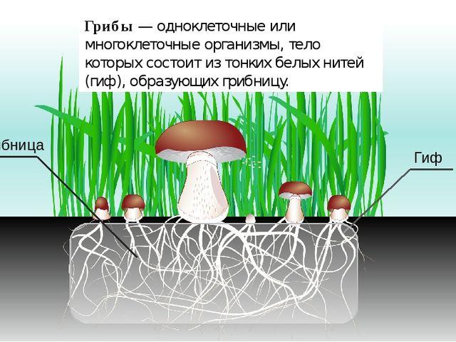 Грибы — одноклеточные или многоклеточные организмы, тело которых состоит из...
