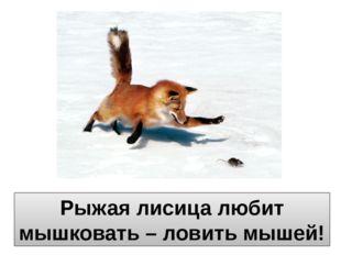 Рыжая лисица любит мышковать – ловить мышей!