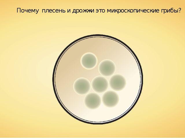 Почему плесень и дрожжи это микроскопические грибы?