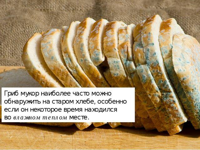 Гриб мукорнаиболее часто можно обнаружить на старом хлебе, особенно если он...