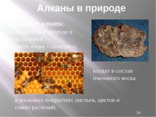 Среди животных алканы встречаются в качестве ферромонов у насекомых - муха це