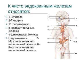 К чисто эндокринным железам относятся: 1- Эпифиз 2-Гипофиз 11-Гипоталамус 3-П