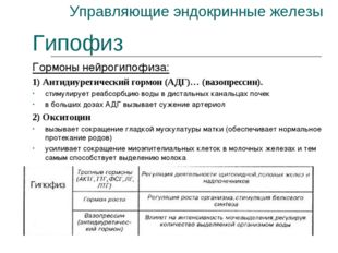 Управляющие эндокринные железы Гипофиз Гормоны нейрогипофиза: 1) Антидиуретич