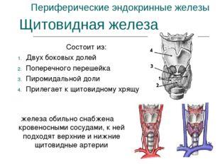 Периферические эндокринные железы Состоит из: Двух боковых долей Поперечного