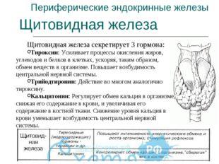 Периферические эндокринные железы Щитовидная железа Щитовидная железа секрети