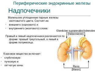 Периферические эндокринные железы Маленькие уплощенные парные железы желтоват
