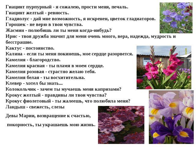 Гиацинт пурпурный - я сожалею, прости меня, печаль. Гиацинт желтый - ревность...