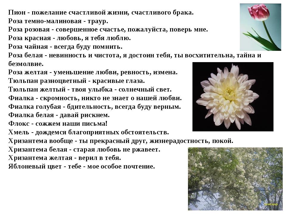 Пион - пожелание счастливой жизни, счастливого брака. Роза темно-малиновая -...