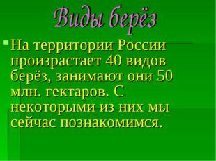 На территории России произрастает 40 видов берёз, занимают они 50 млн. гектар