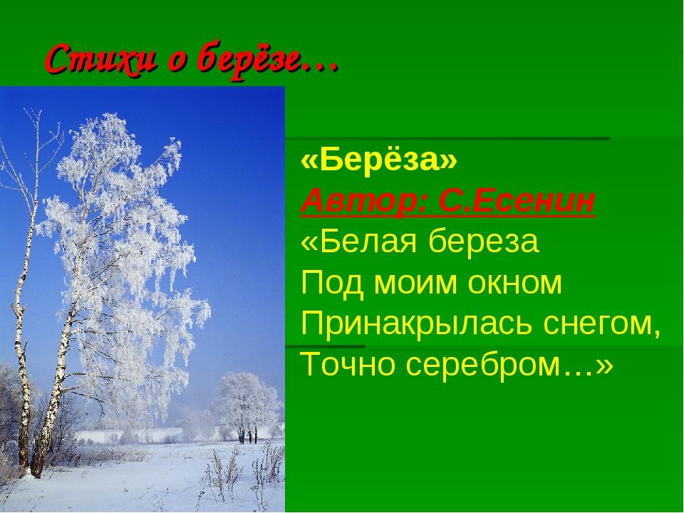 Стихи о берёзе… «Берёза» Автор:С.Есенин «Белая береза Под моим окном Принакр...