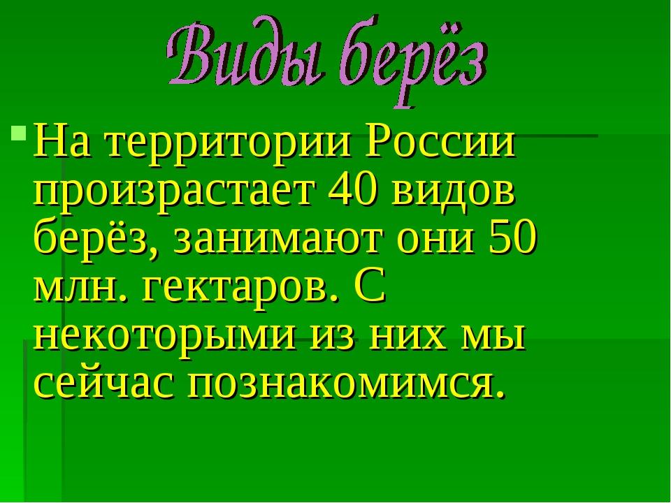 На территории России произрастает 40 видов берёз, занимают они 50 млн. гектар...