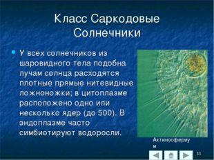 Класс Саркодовые Солнечники У всех солнечников из шаровидного тела подобна лу