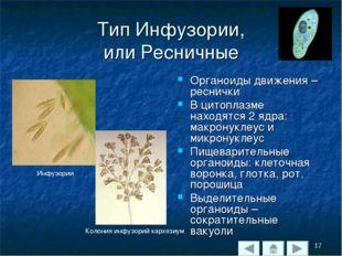Тип Инфузории, или Ресничные Органоиды движения – реснички В цитоплазме наход