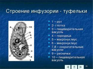 Строение инфузории - туфельки 1 – рот 2- глотка 3 – пищеварительная вакуоль 4