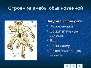 Строение амебы обыкновенной Найдите на рисунке: Ложноножки Сократительную вак