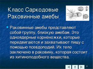 Класс Саркодовые Раковинные амебы Раковинные амебы представляют собой группу,