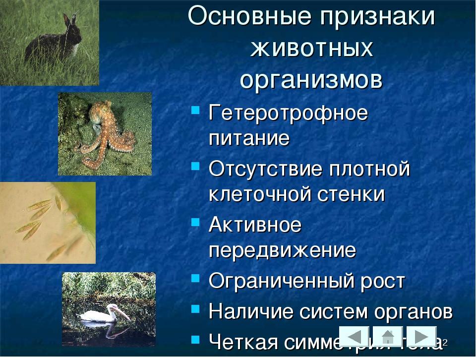 Основные признаки животных организмов Гетеротрофное питание Отсутствие плотно...