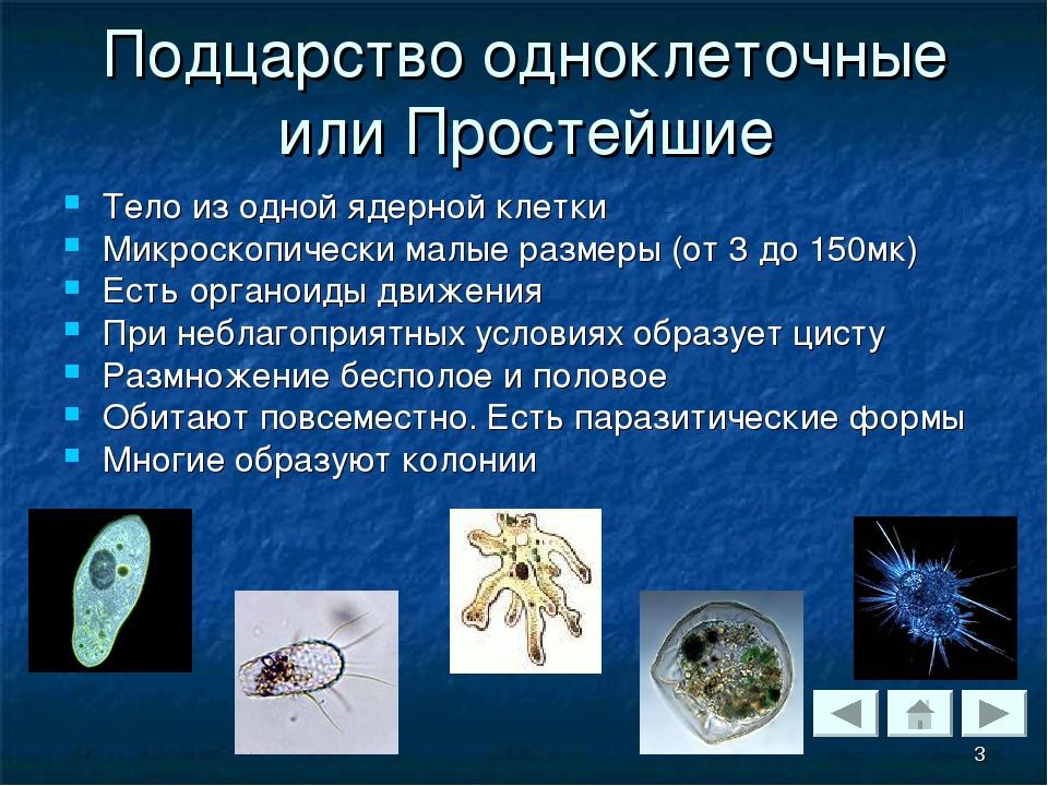 Подцарство одноклеточные или Простейшие Тело из одной ядерной клетки Микроско...