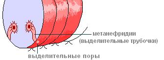 hello_html_m6b527050.png