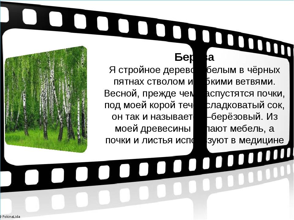 Берёза Я стройное дерево с белым в чёрных пятнах стволом и гибкими ветвями....