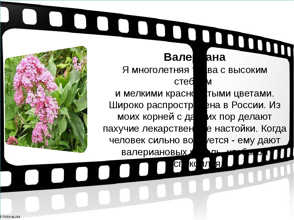 Валериана Я многолетняя трава с высоким стеблем и мелкими красноватыми цвета...