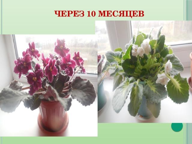 hello_html_161624e1.jpg