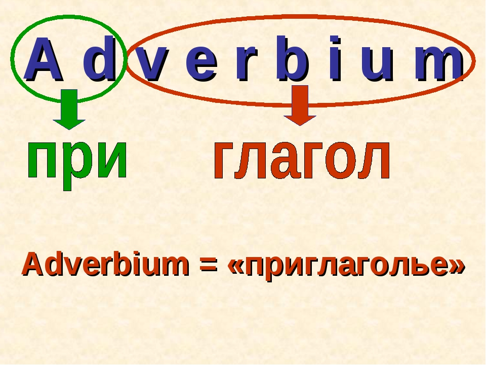 A d v e r b i u m Adverbium = «приглаголье»