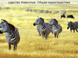 Царство Животные. Общая характеристика