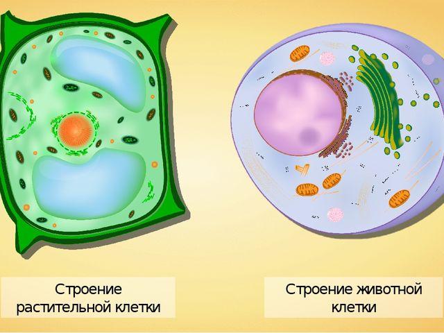 Строение животной клетки Строение растительной клетки