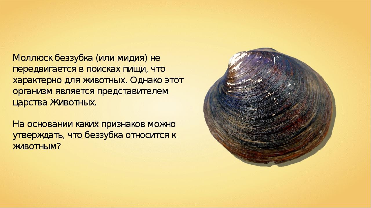 Моллюск беззубка (или мидия) не передвигается в поисках пищи, что характерно...
