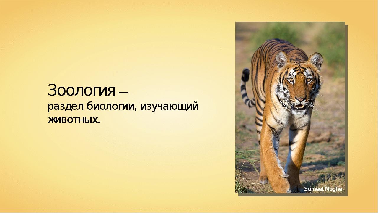 Зоология — раздел биологии, изучающий животных. Sumeet Moghe