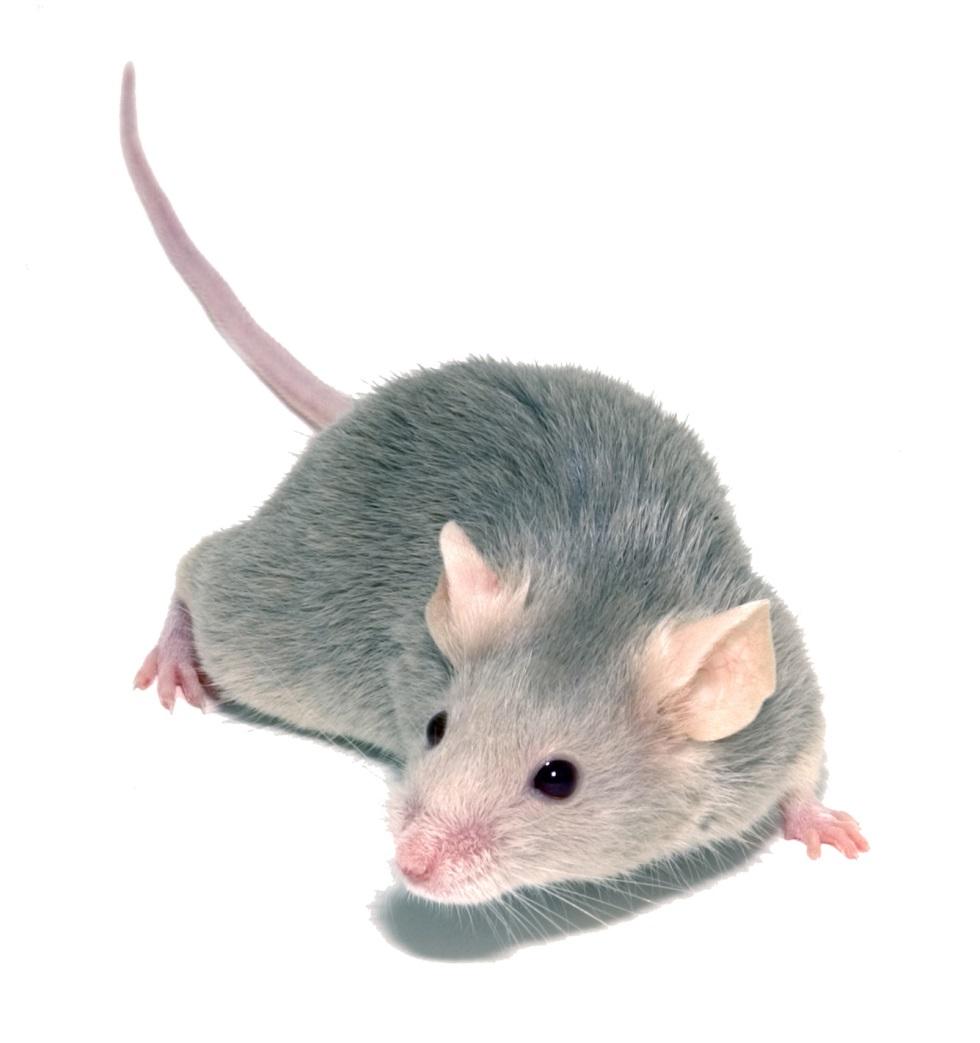 Картинка мышей для детей на белом фоне, рисунки пауков